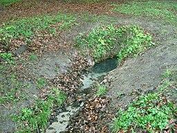 Raben-Steinfelder-Forst-22-04-2009-116b