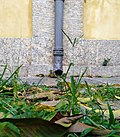 Rainwater drainage- University Palace of UFRJ.jpg