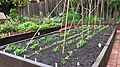 Raised Redwood Gardenbeds 06.jpg