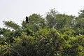 Ranganathittu Bird Sanctuary 24.jpg