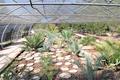 Real Jardín Botánico Juan Carlos I (RPS 07-06-2014) invernadero de cycadales.png