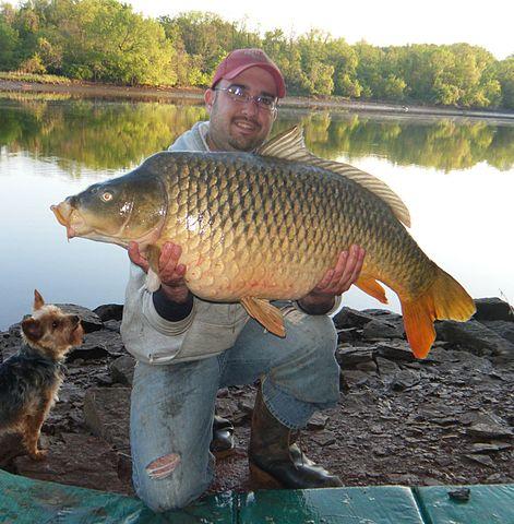 Šťastný rybár s kapitálnym kaprom - našou najvýznamnejšou hospodárskou rybou