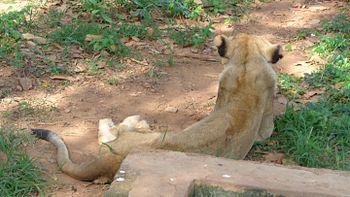 Resting queen.jpg
