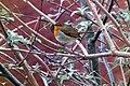 Return Of Robin (23936181).jpeg