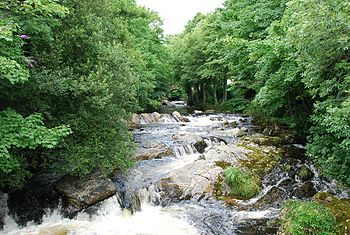 River Erme at Ivybridge in summer.jpg