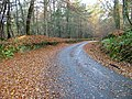 Road Through Englishton Muir Wood - geograph.org.uk - 277369.jpg