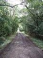 Road by Bearshank Wood - geograph.org.uk - 528095.jpg