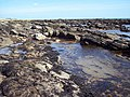 Rock pools at East Haven - geograph.org.uk - 445407.jpg