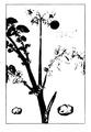 Roze fig.27 à 29.png