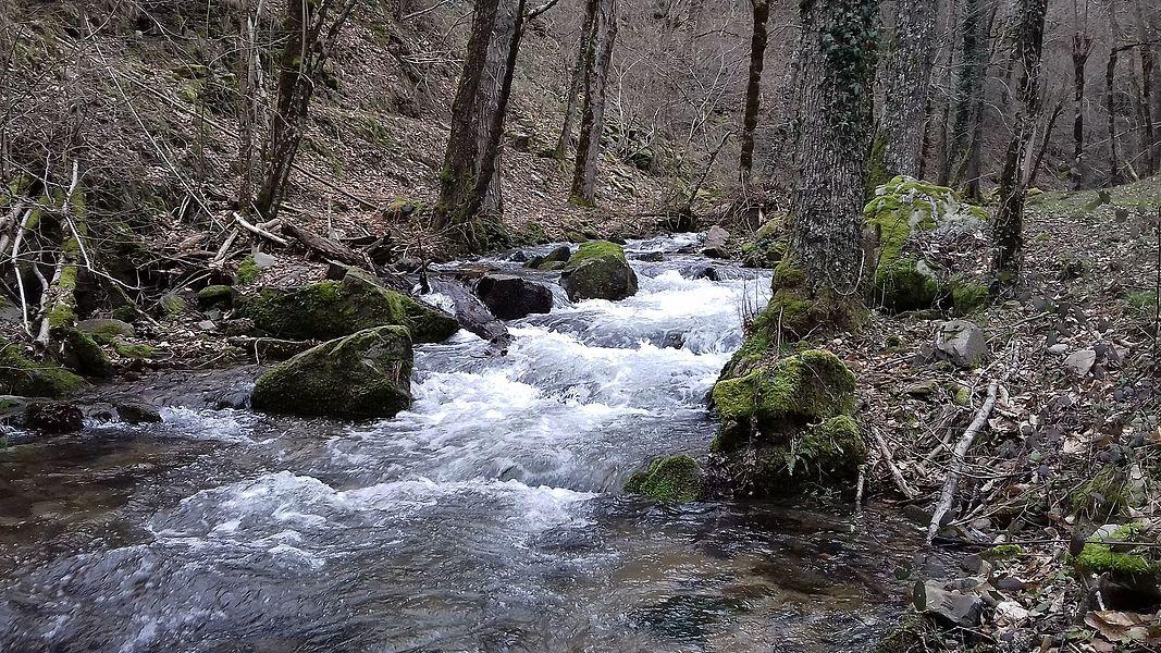 Le Bonance à la hauteur du pont des Gandalgues. Pomayrols, Aveyron, France