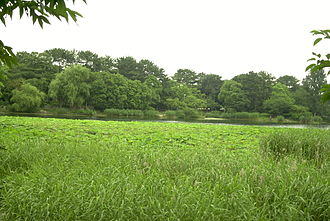 Hattori Ryokuchi Park - A large pond in Ryokuchi Koen.