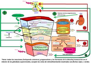 The Complete Process of esteroides epidurales