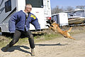 SFS military working dogs train 120227-F-YU668-330.jpg