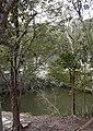 Sacred Cenote 2 (4387190107).jpg