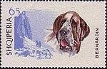 Saint-Bernard-Dog Albania stamp.jpg