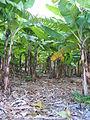 Saint John, Barbados 004.jpg