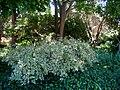 San Mateo Arboretum, San Mateo, CA - IMG 9084.JPG