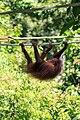 Sandakan Sabah Sepilok-Orangutan-Rehabilitation-Centre-04.jpg