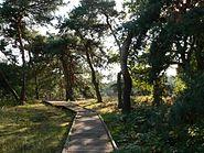 Schwanheimer Düne Holzpfad