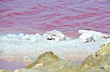 Salt - Wikipedia
