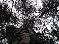 Seney National Wildlife Refuge (6032608183).jpg