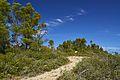 Sentiero - panoramio (4).jpg