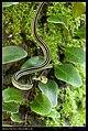 Serpentes (6085491722).jpg