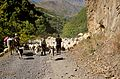 Shatili Shepherds (8044091103).jpg