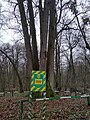 Shestystovburne oak tree2.jpg