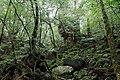 Shiratani Unsuikyo, Yakushima island, Japan (4196793828).jpg