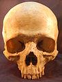 Skull human.jpg