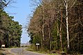 Skulyn Kovelskyi Volynska-Skulynskyi nature reserve-view from road-1.jpg