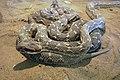 Snakes of iran مارها در ایران 03.jpg