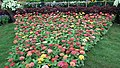 Snap from Lalbagh Flower Show Aug 2013 8392.JPG