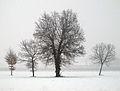 Snowfall - Via Molinazza, Scandiano, Reggio Emilia, Italy - January 30, 2011 01.jpg