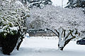 Snowy trees and men Seattle 2008.jpg