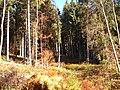Sommerlicher Herbst Herrenstuhl - panoramio (15).jpg