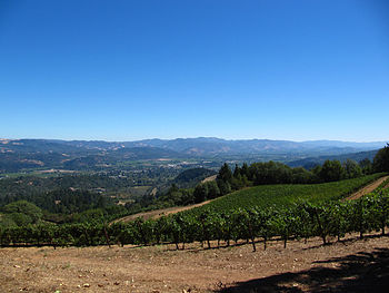 Vineyard in the California wine region of Napa...