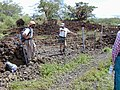 Starr-020422-0068-Bidens pilosa-fenceline road with Art and Ted-Puu o Kali-Maui (24548442335).jpg