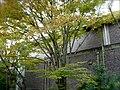Sub-Gymnasium at Kinugasa Campus (Ritsumeikan University, Kyoto, Japan).JPG