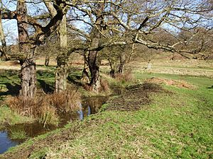 Sudbrook (stream) - Sudbrook, near Ham Gate and pond, Richmond Park