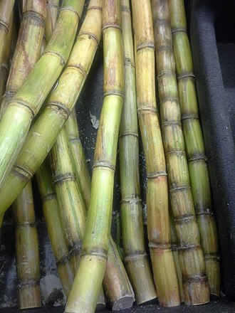 Sugar - This is a close-up image of sugar cane. Demand for sugar helped create the colonial system in areas where cultivation of sugar cane was profitable.