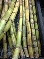Sugar Cane closeup.jpg