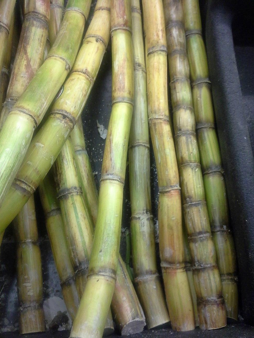 Sugar Cane closeup