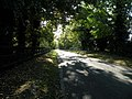Sun-dappled road to Dullingham - geograph.org.uk - 1008709.jpg
