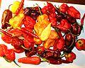 Super Hot peppers.jpg