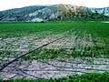 Sustaniable Micro irrigation in Northern Syria.jpg