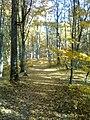 Szováta melletti Tivoli erdő ősszel.jpg
