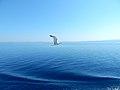 THE MAGIC SEA IN ATHOS.jpg