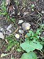 TINY WILD FLOWER IN ARU VALLEY , PAHALGAM, KASHMIR 2.jpg